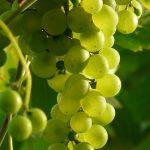 赤ワインと白ワイン2