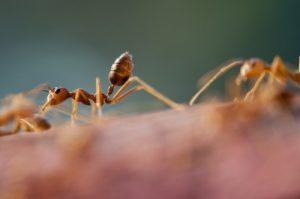 蟻退治を洗剤で3