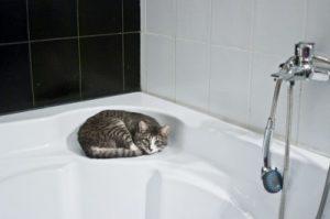 お風呂の排水溝の髪の毛を溶かす方法2