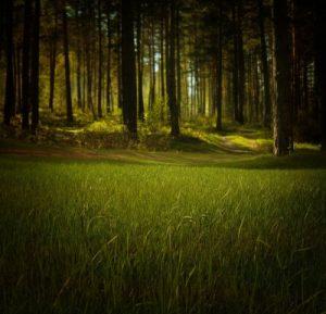 樹」と「木」の違いを徹底解説!意味と使い分け/使い方は?