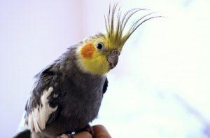 鳥が水浴び2